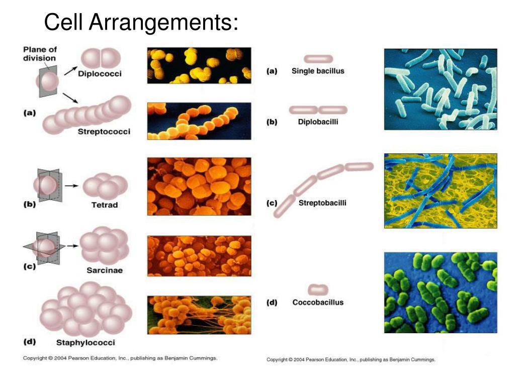 Cell Arrangements: