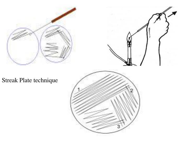 Streak Plate technique