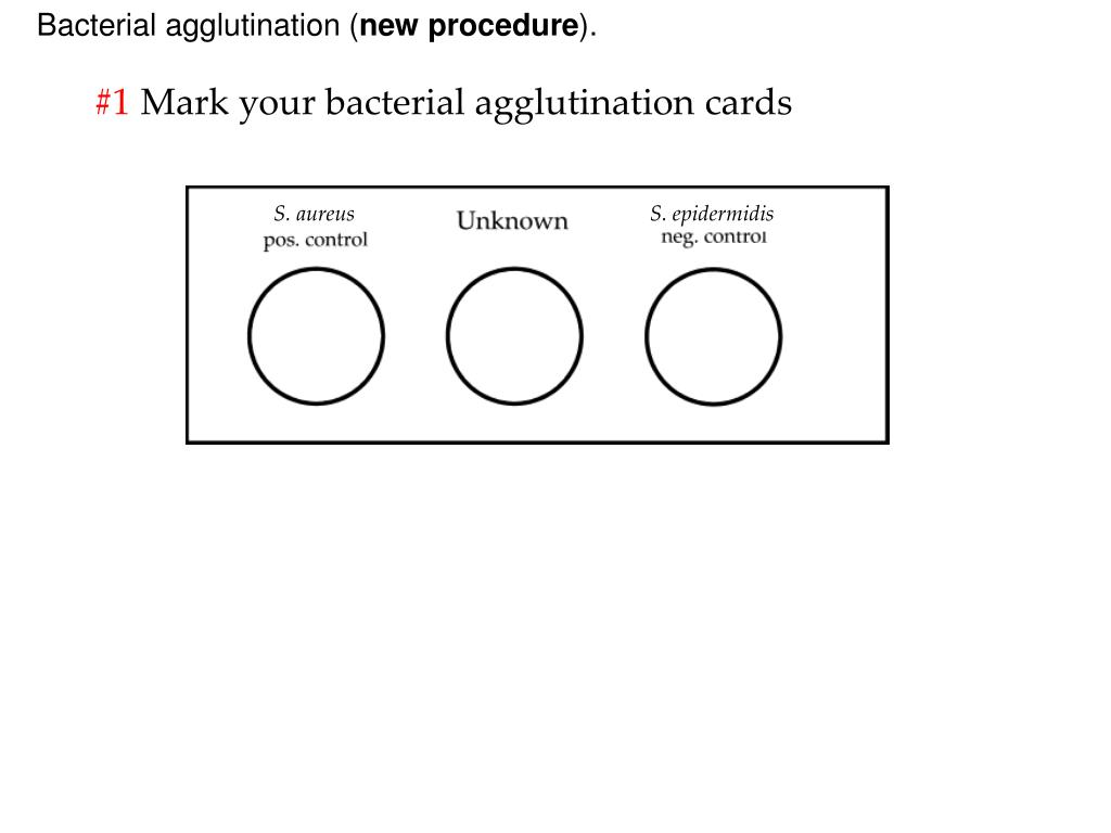 Bacterial agglutination (