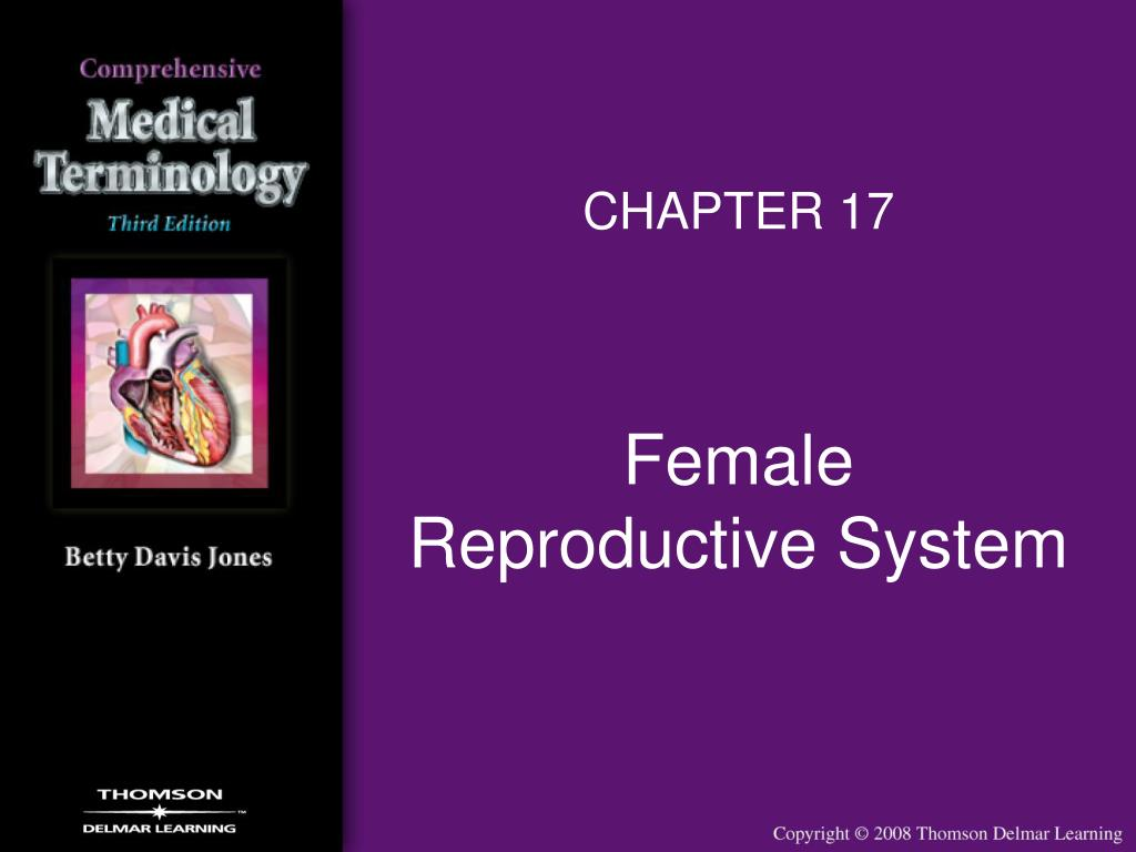 female reproductive system l.