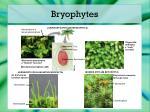bryophytes6