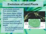 evolution of land plants
