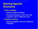 staining specific structures34