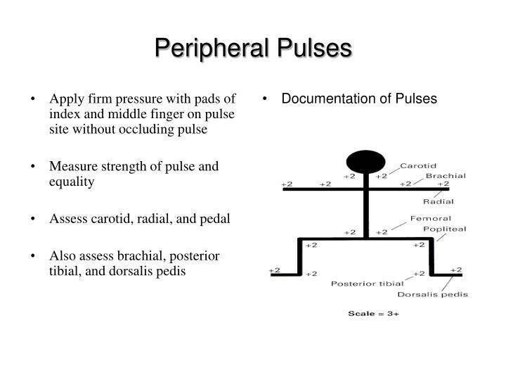 Apply firm pressure with pads of index and middle finger on pulse site without occluding pulse