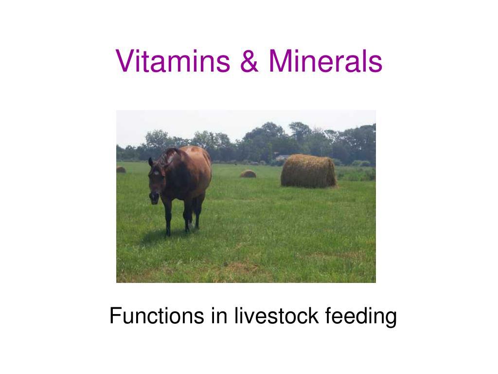 vitamins minerals l.