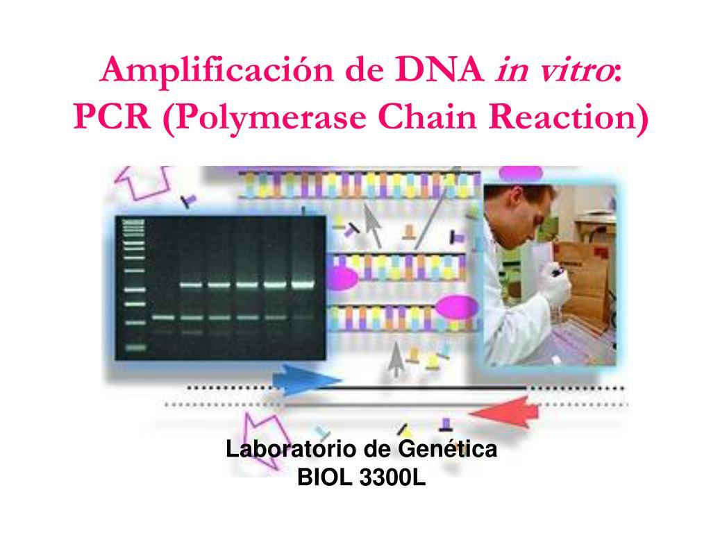 amplificaci n de dna in vitro pcr polymerase chain reaction l.