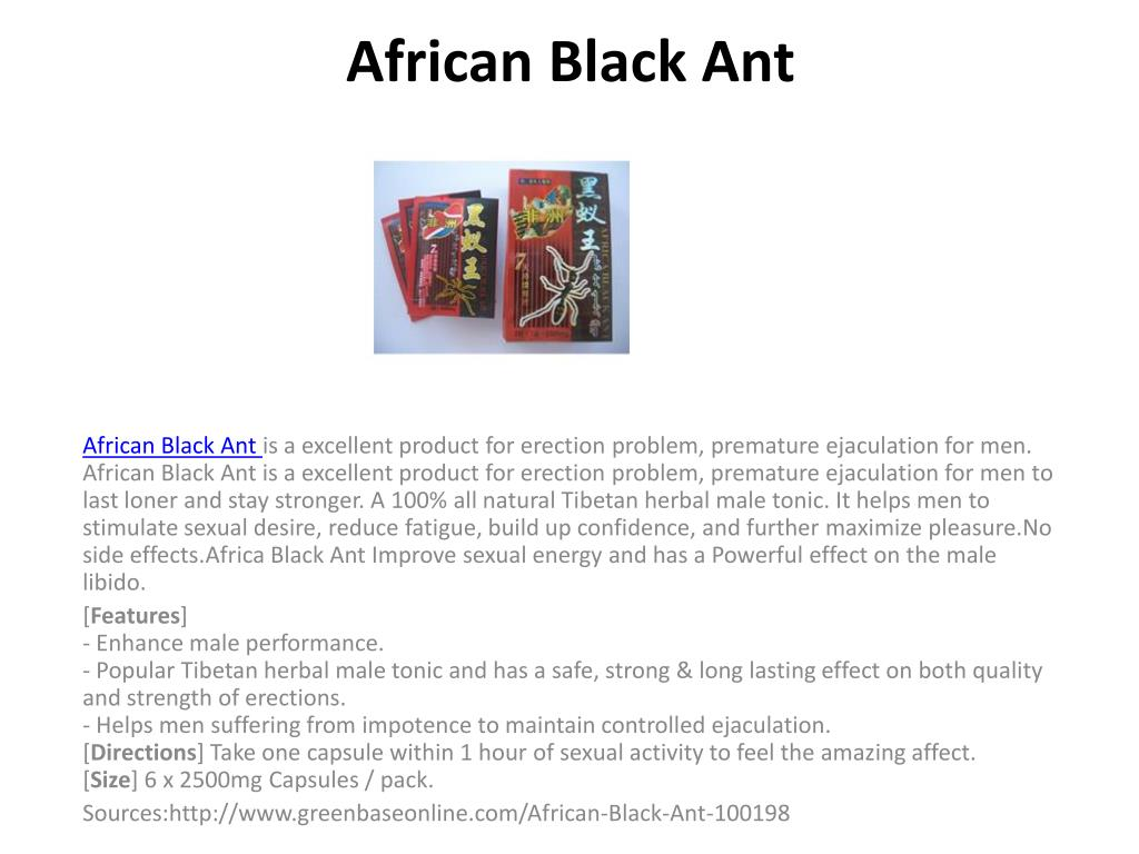 african black ant l.