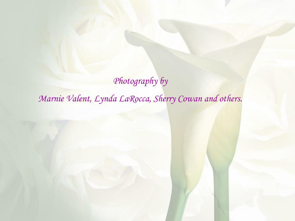 Photography by