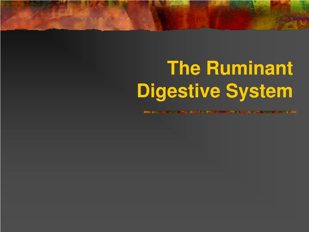 the ruminant digestive system l.