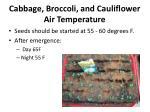 cabbage broccoli and cauliflower air temperature