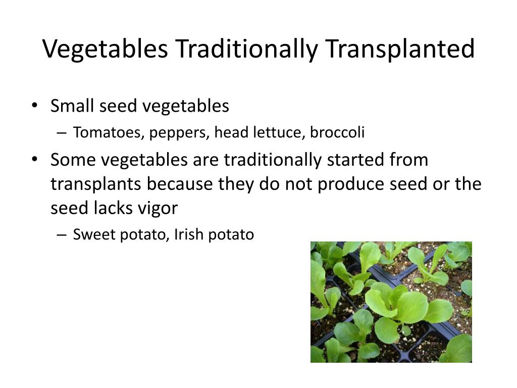 Vegetables Traditionally Transplanted