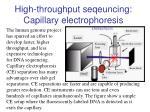 high throughput seqeuncing capillary electrophoresis