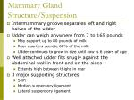 mammary gland structure suspension