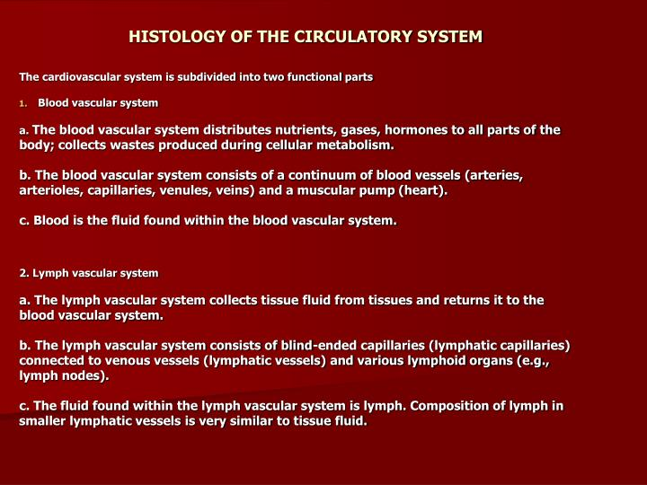 histology of the circulatory system n.