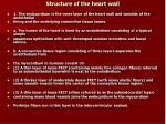 structure of the heart wall