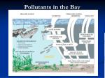 pollutants in the bay