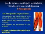 les ligaments actifs p ri articulaire v ritable syst me stabilisateur11