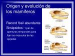 origen y evoluci n de los mam feros