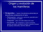 origen y evoluci n de los mam feros4