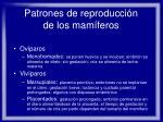 patrones de reproducci n de los mam feros