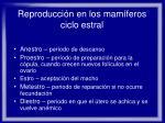 reproducci n en los mam feros ciclo estral