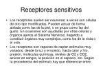 receptores sensitivos2