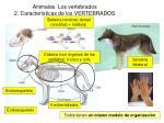 animales los vertebrados 2 caracter sticas de los vertebrados