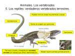 animales los vertebrados 5 los reptiles verdaderos vertebrados terrestres