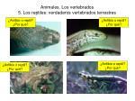 animales los vertebrados 5 los reptiles verdaderos vertebrados terrestres20