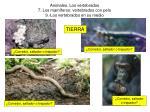 animales los vertebrados 7 los mam feros vertebrados con pelo 9 los vertebrados en su medio31