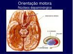 orienta o motora n cleos dopamin rgico