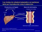 los niveles de colesterol plasm tico se mantienen tanto por la producci n como la absorci n