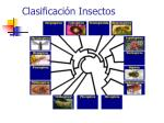 clasificaci n insectos