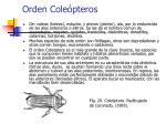 orden cole pteros