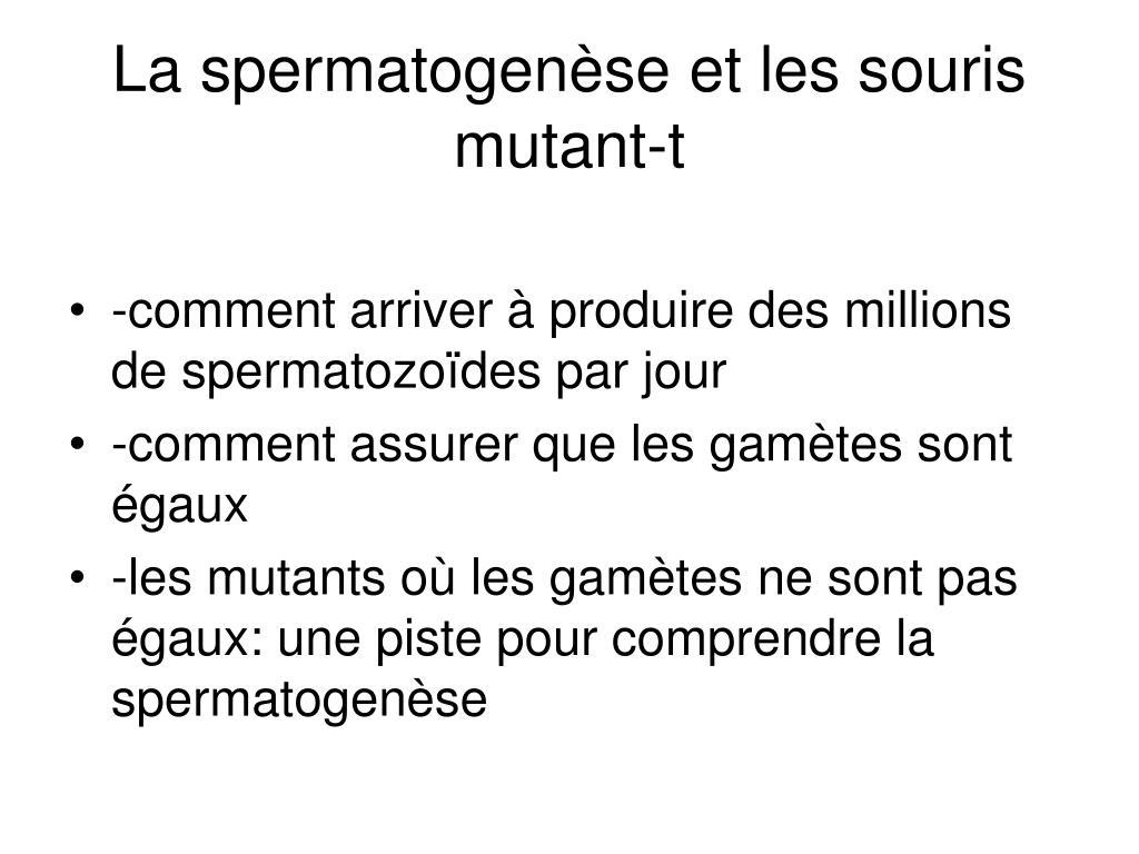 la spermatogen se et les souris mutant t l.