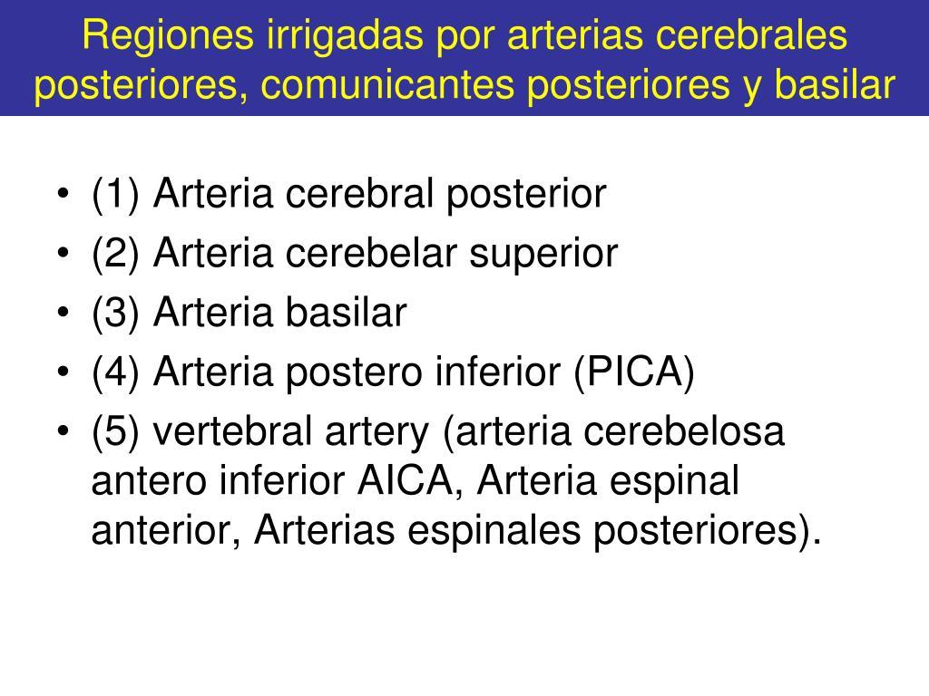 Regiones irrigadas por arterias cerebrales posteriores, comunicantes posteriores y basilar