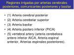 regiones irrigadas por arterias cerebrales posteriores comunicantes posteriores y basilar