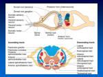 human physiology9