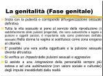 la genitalit fase genitale