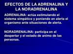 efectos de la adrenalina y la noradrenalina