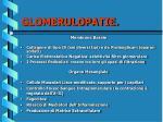 glomerulopatie