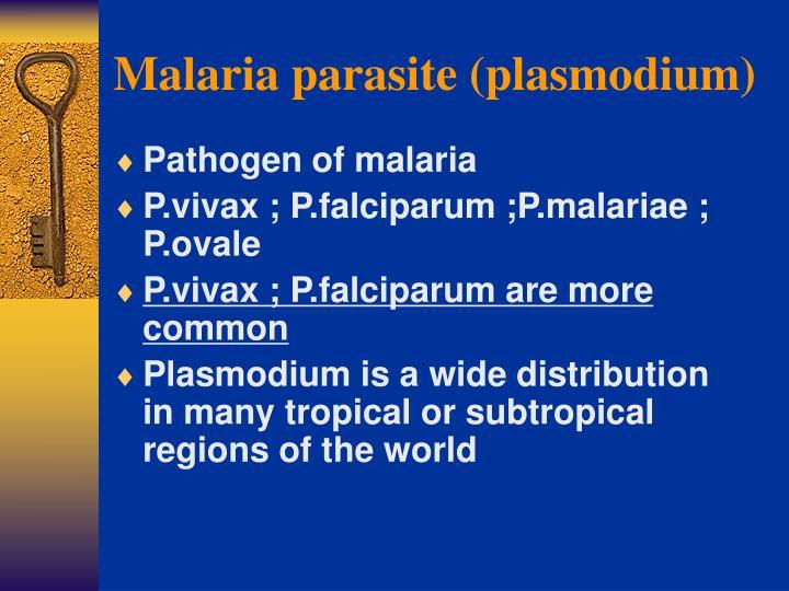 malaria parasite plasmodium n.