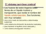 el sistema nervioso central6