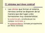 el sistema nervioso central7