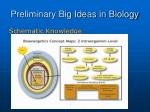 preliminary big ideas in biology17