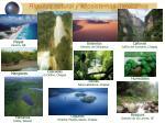riqueza natural y ecosistemas mexicanos