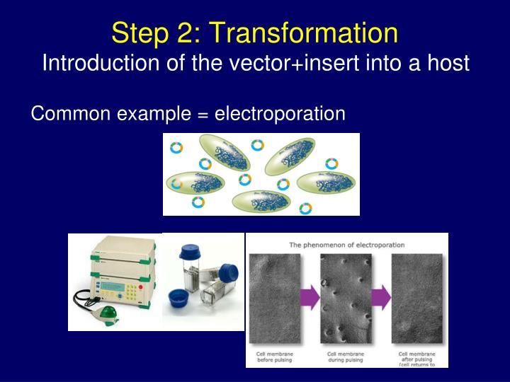 Step 2: Transformation
