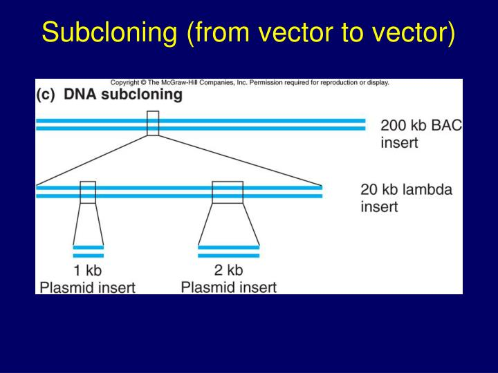 Subcloning (from vector to vector)