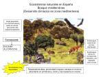 ecosistemas naturales en espa a bosque mediterr neo desarrollo clim cico en zona mediterr nea
