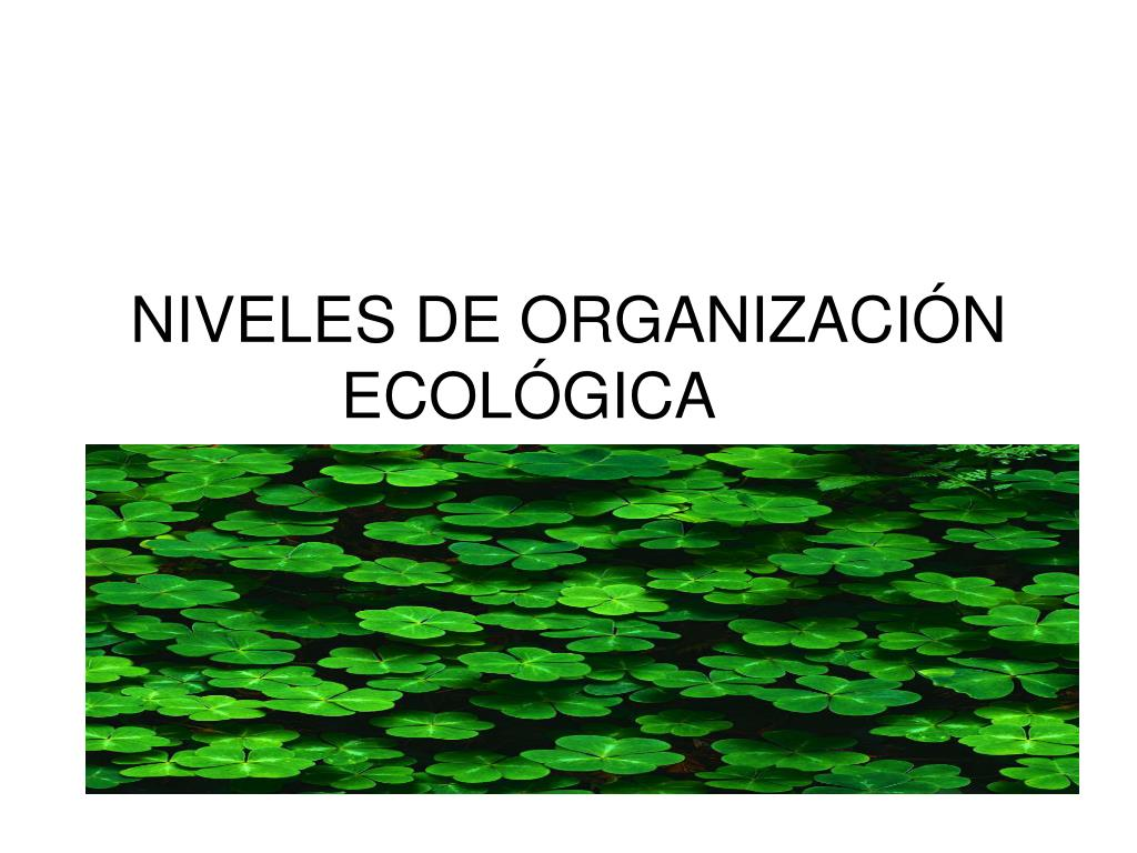 niveles de organizaci n ecol gica l.